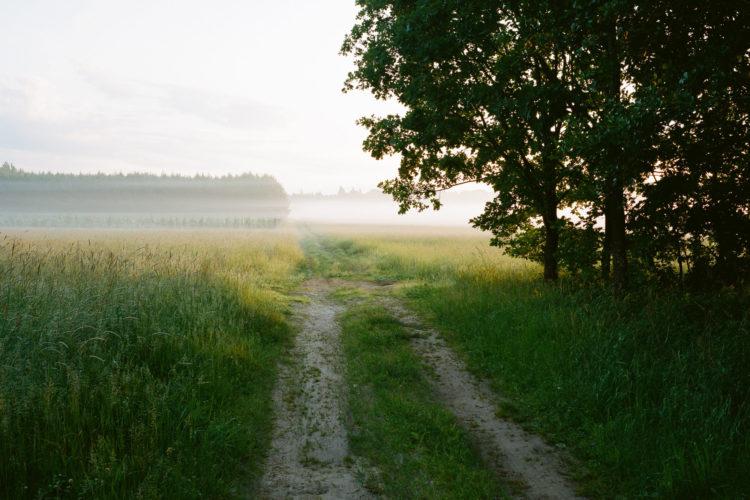 Le chemin qui mène à la forêt de Białowieża, à l'aube.
