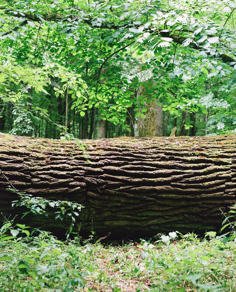 Naturally fallen tree